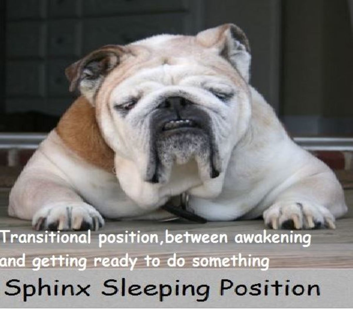 what-your-dogs-sleeping-positions-tell-you-about-him