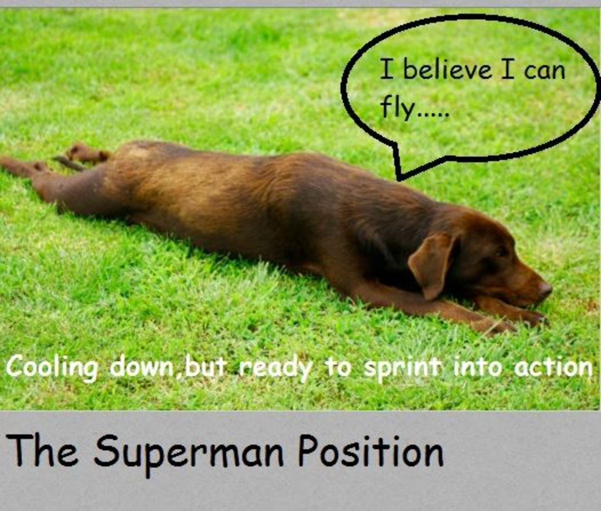 What Your Dog's Sleeping Positions Tell You About Them