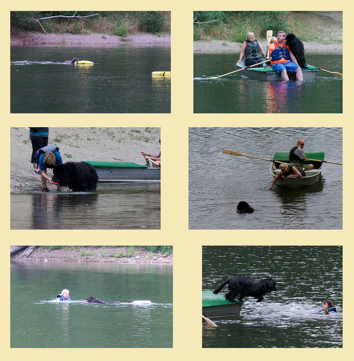 NCA Senior Water Rescue Dogs at Work