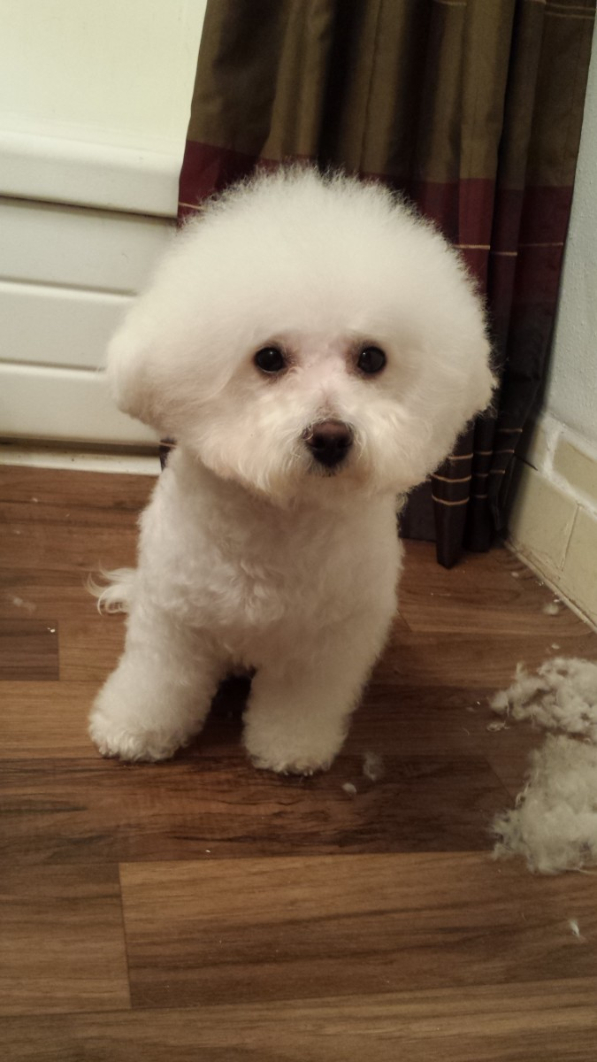 After grooming my pup! As you can see I have not yet swept his hair in the corner.