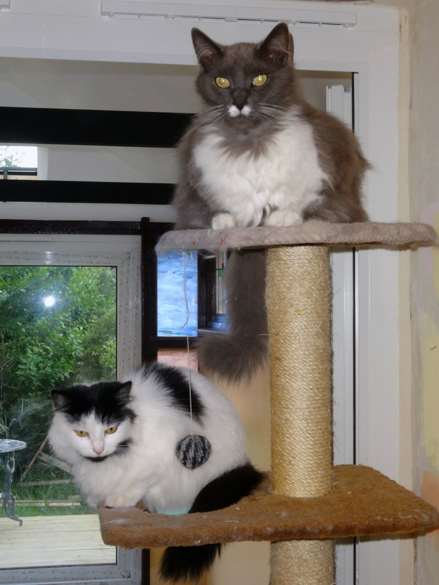 Our cats using their old cat tree before I modified it for the conservatory.