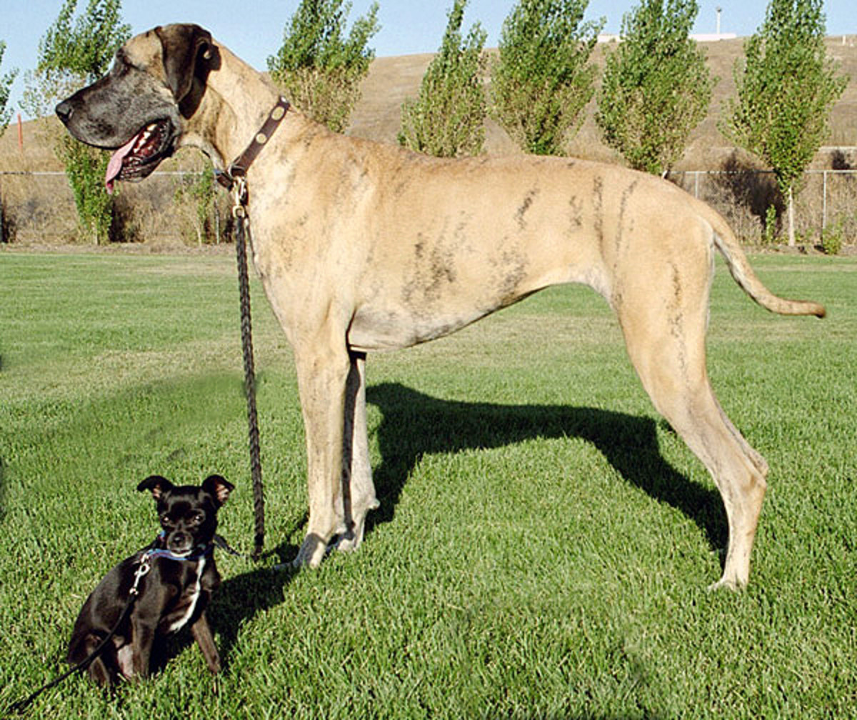 Do you have enough space for a large dog?