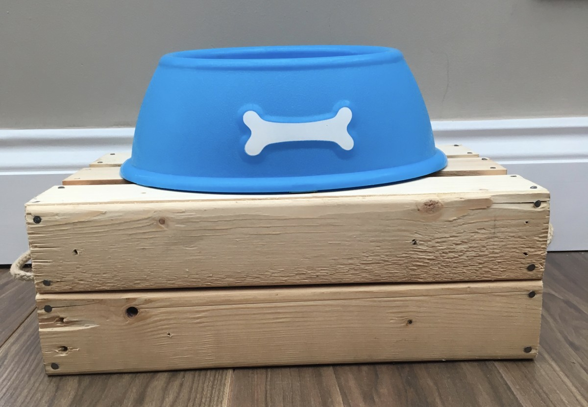 Adjust the height of bowls so you dog is not stooping to eat and drink.