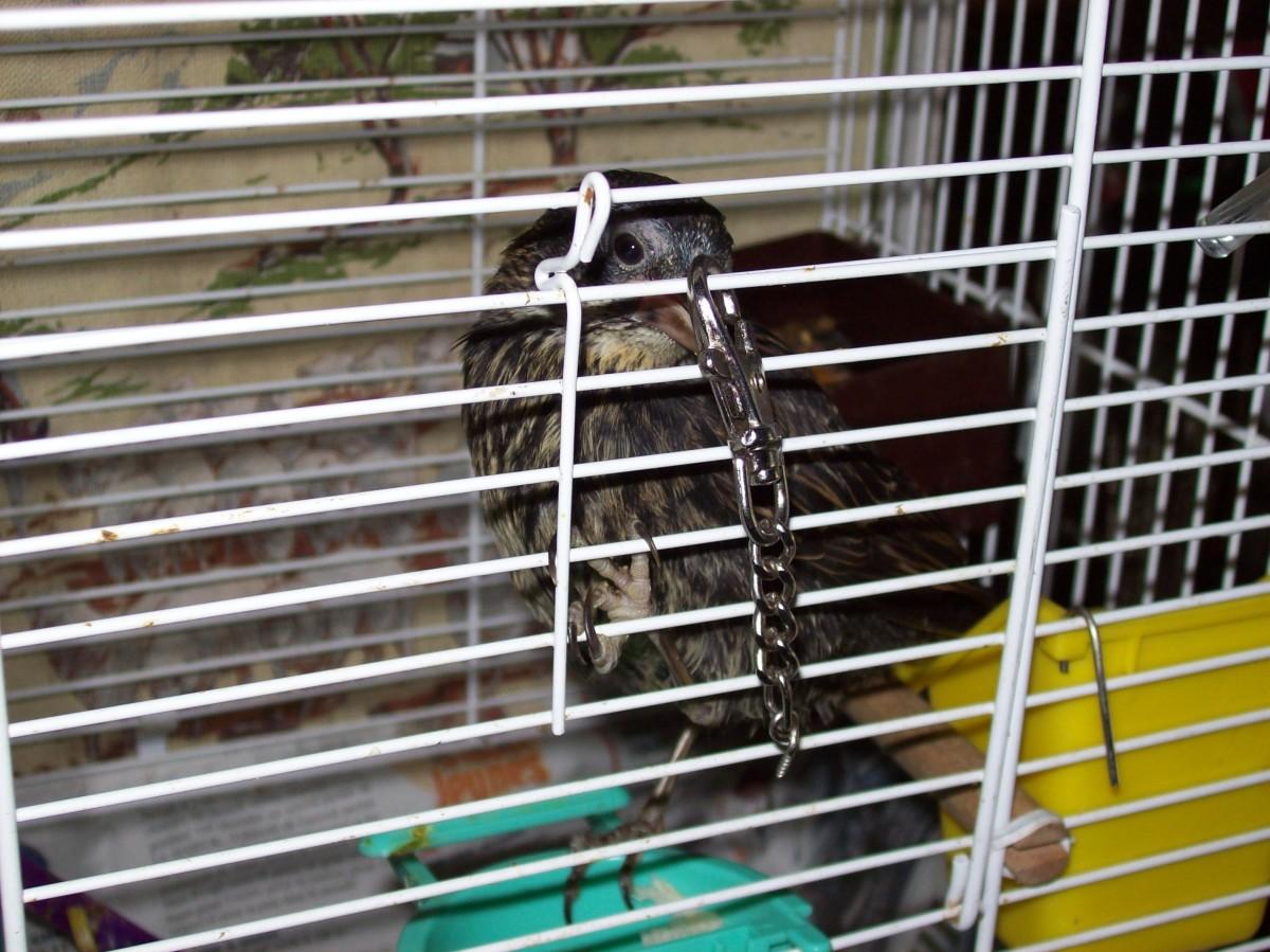 what-do-i-feed-a-baby-bird-i-found