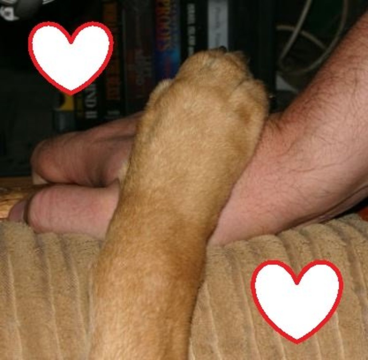 ways-dogs-show-their-love