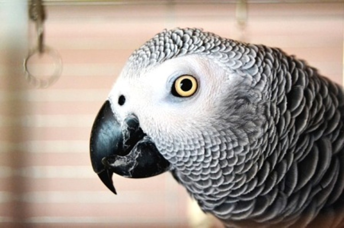 A parrot should be near you, not routinely kept in a separate area of the house.