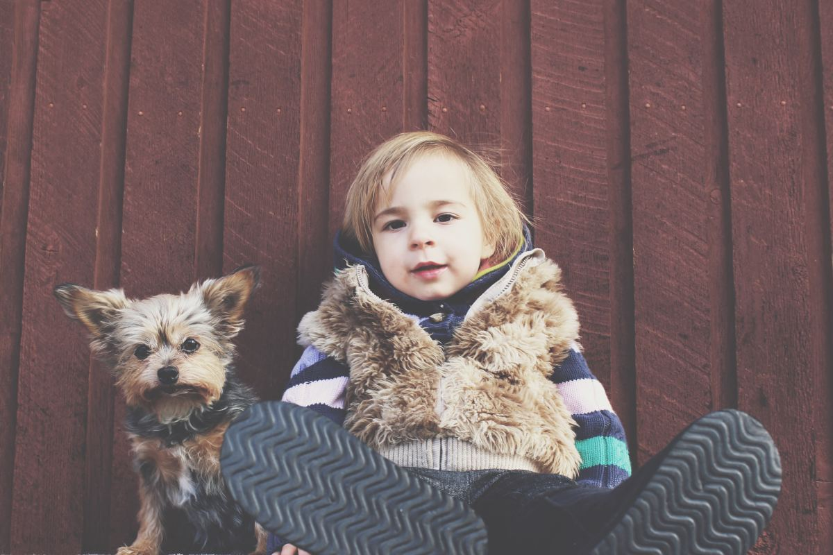 Being excellent companions is one key reason that Yorkies make for a great pet.