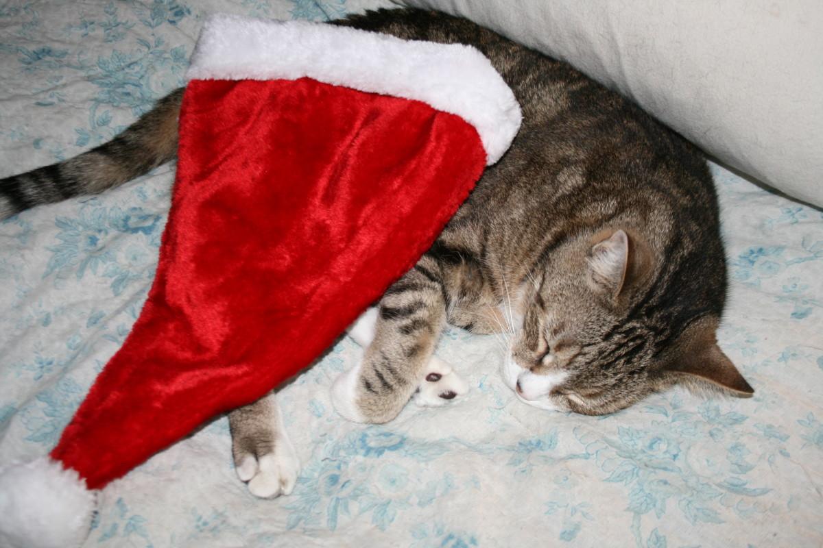 The Santa hat, too?