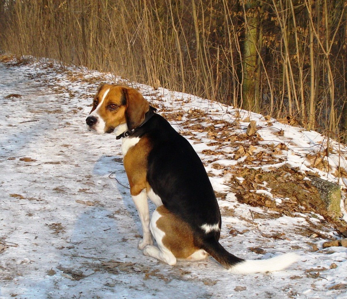 Could a pet dog survive outside in the wild?