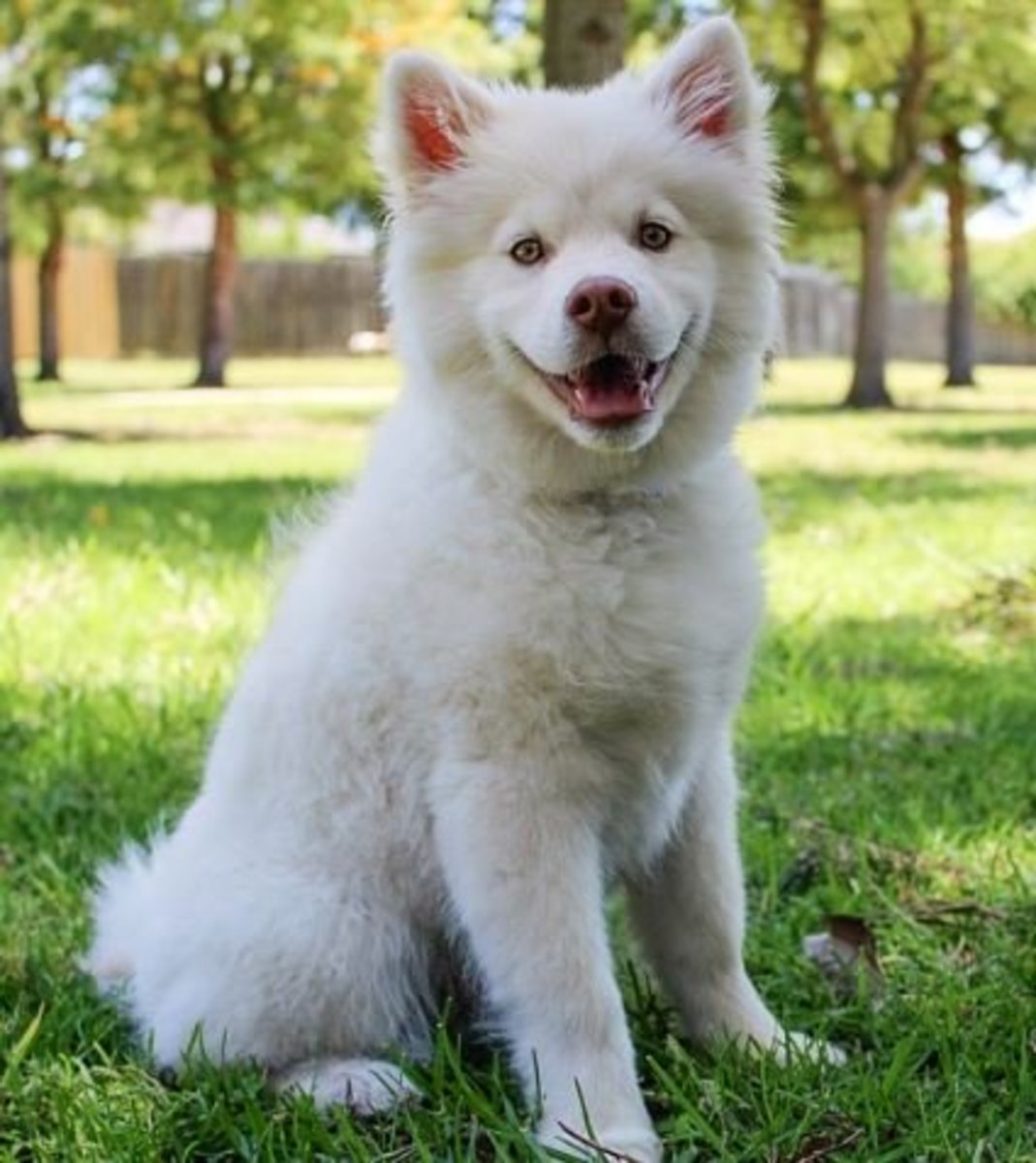 At what point can a puppy breathing rapidly be a cause for serious concern? A good place to start is through an assessment of the normal breathing rate ...