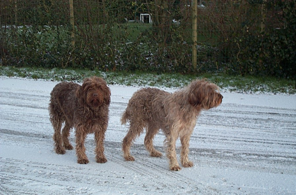 Sarah (left) and her sister Tsjip