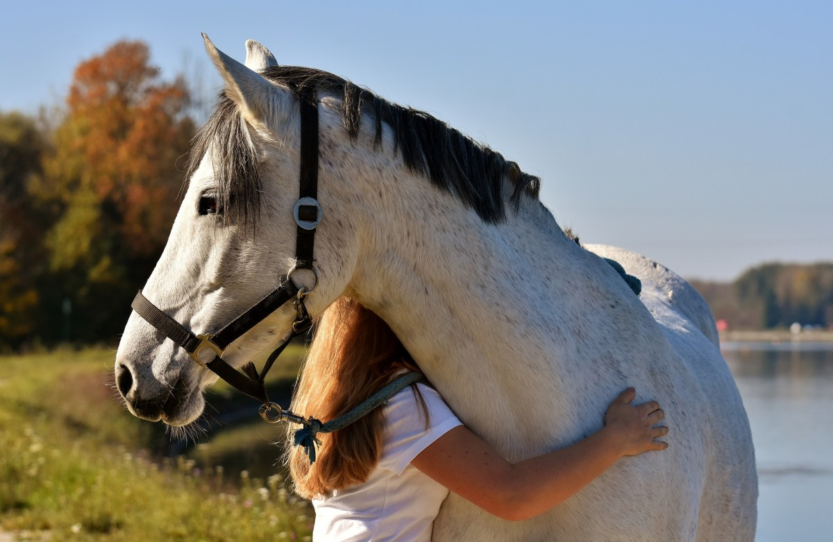 Horses are known to be exceptionally good at calming hard-to-reach children and recovering addicts, as they often convey an understanding and tranquil presence.
