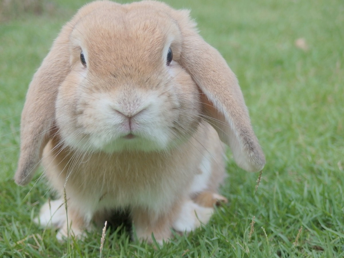 Rabbits can have a wide range of personalities, similar to that of dogs.