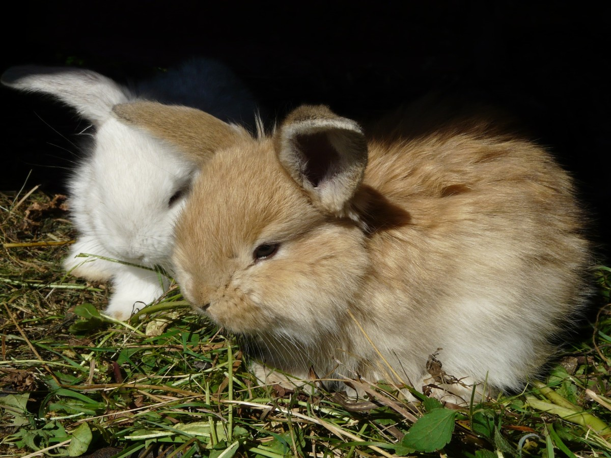 Though the initial bonding period might take a while, rabbits can eventually become super affectionate and loving pets.