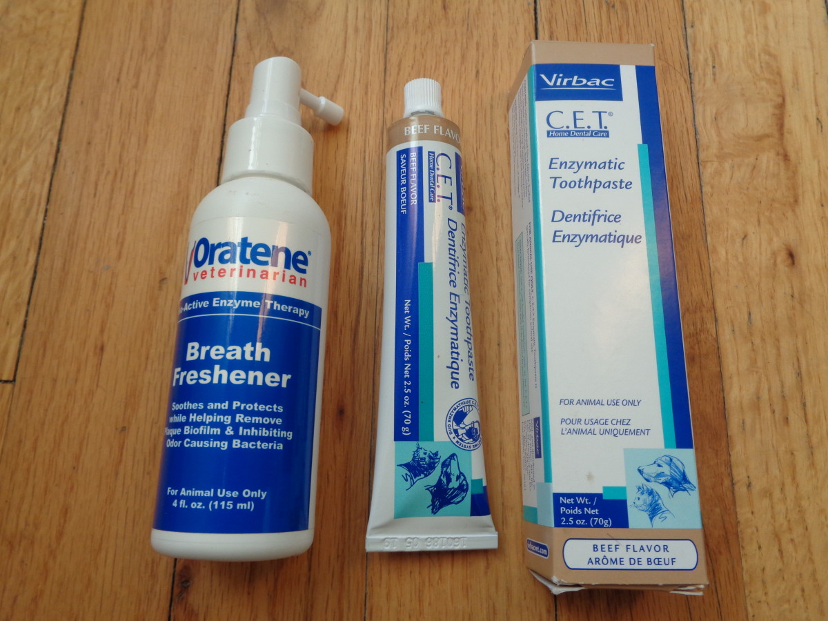 We ended up purchasing some enzymatic toothpaste, as well as enzyme therapy breath freshener for our dental maintenance with Luna.