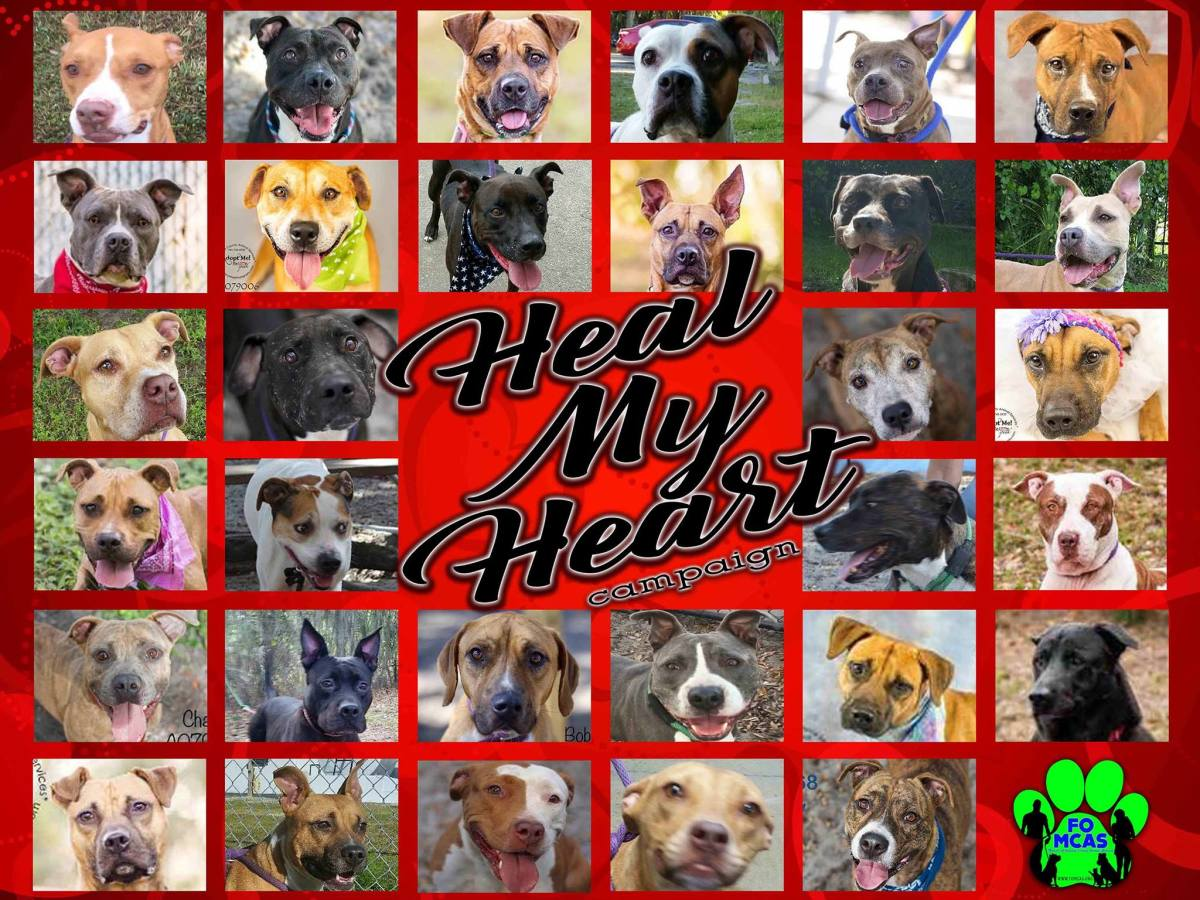"Life-Saving Work for Shelter Dogs via the ""Heal My Heart"" program."