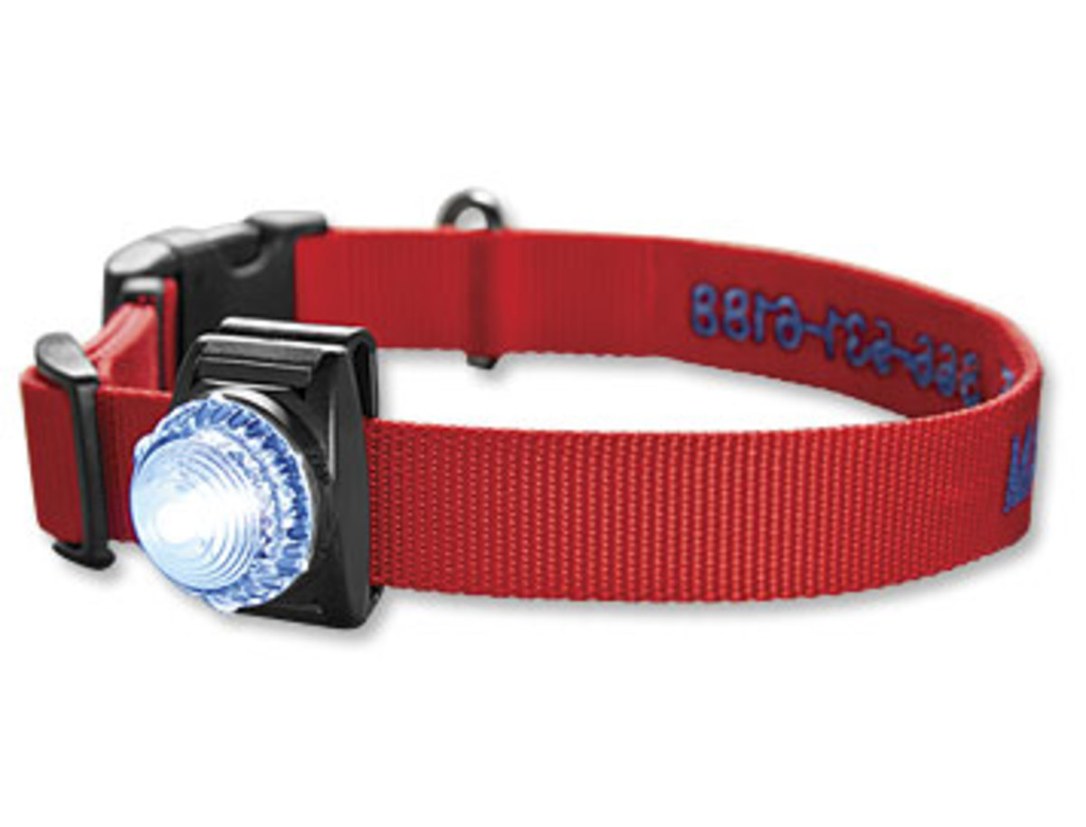 This collar features an LED light