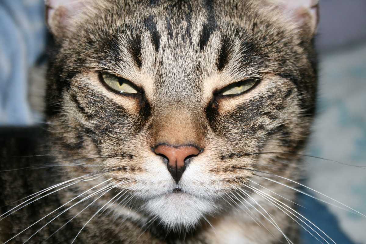 Cats have a full range of facial expressions—some are quite funny.