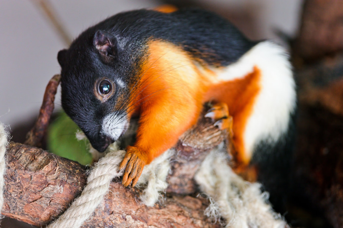 10-exotic-pets-legal-in-new-york