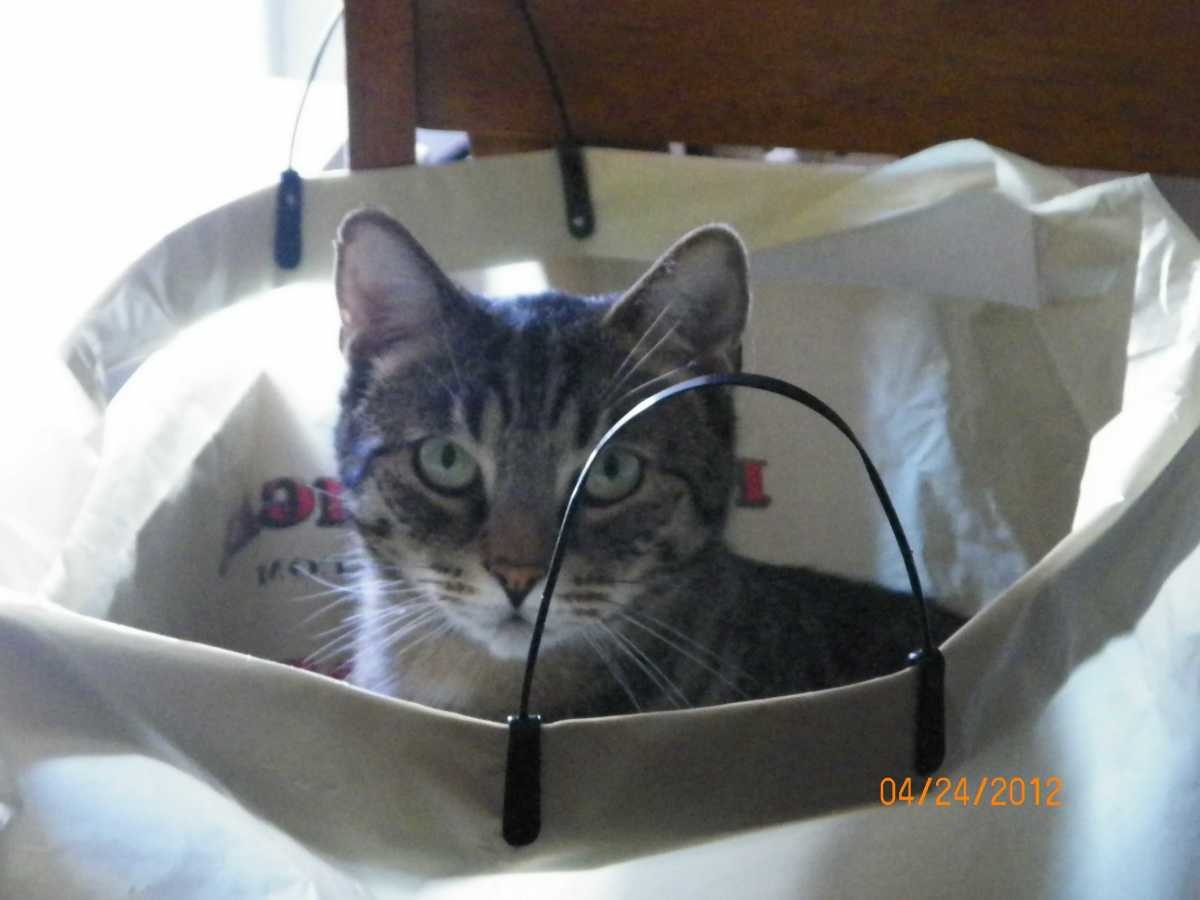 """""""What, I was looking for something.  You didn't put the bag away."""""""