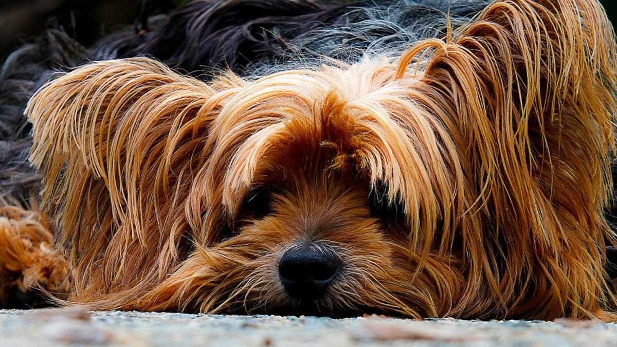 Dogs can get depressed just like you.