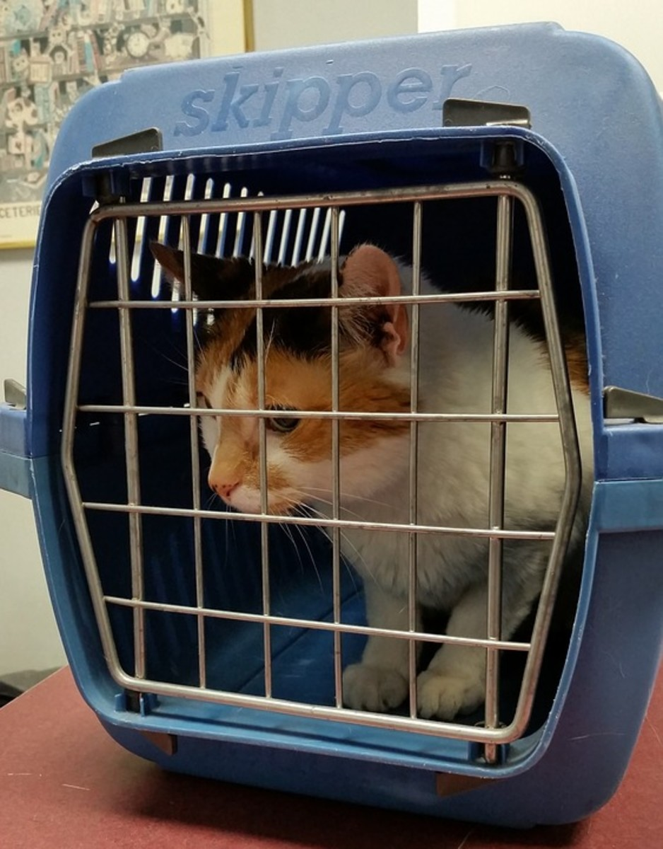A pet carrier is best when taking a smaller animal to the vet or on other excursions.  This keeps them safe and avoids the possibility that they might escape.