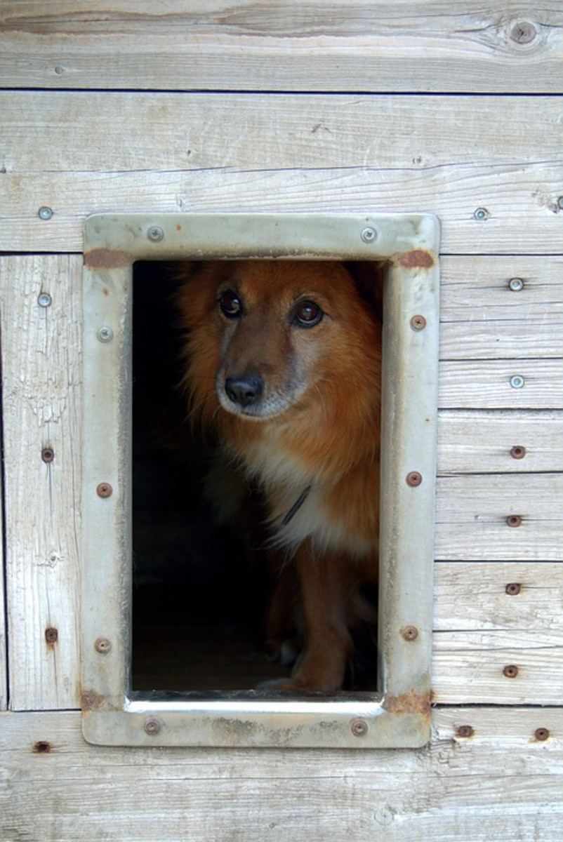 A safe shelter will keep your pet dry and warm.  Add hay to make it even more cozy.