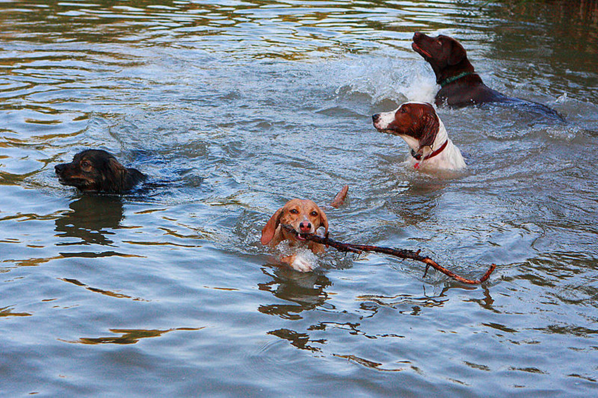 Social dogs who love being in water will love a lakeside camp.