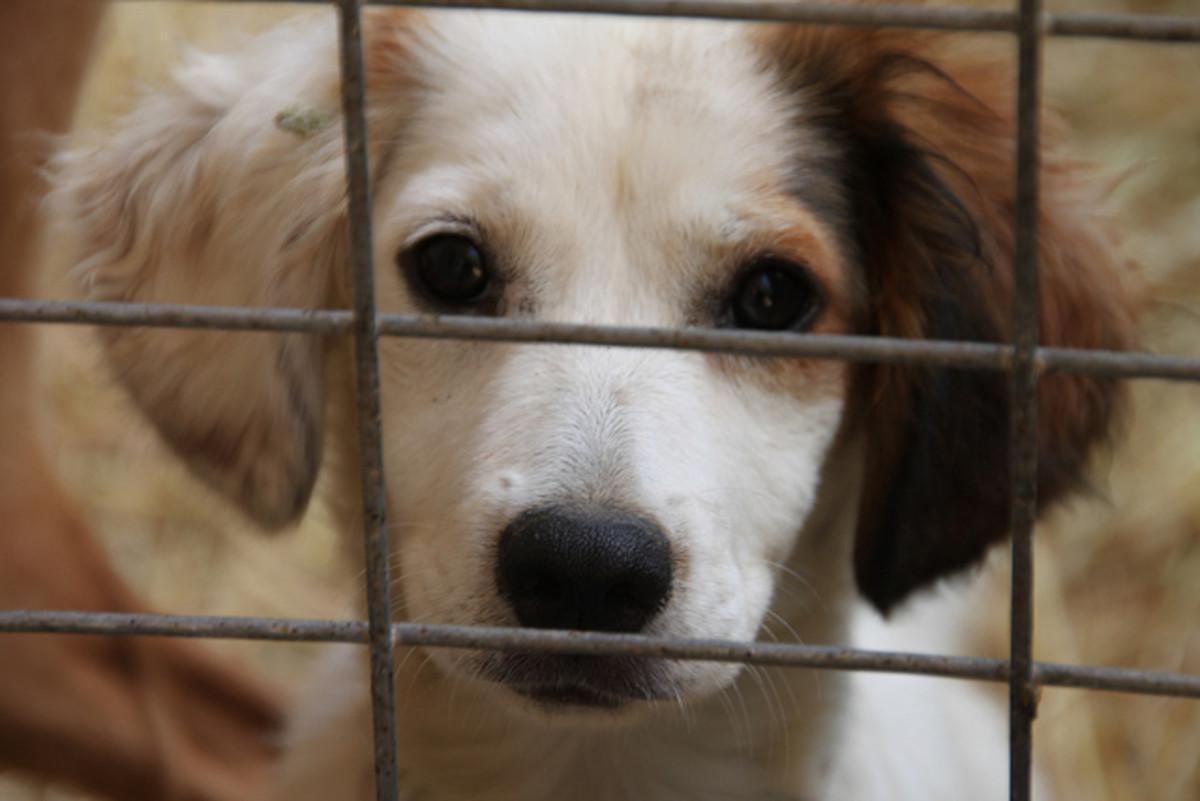 Barınaklardaki köpeklerin çoğu zaten test edildi, ancak aileniz için uygun olduklarından emin olmak için tekrar test etmelisiniz.