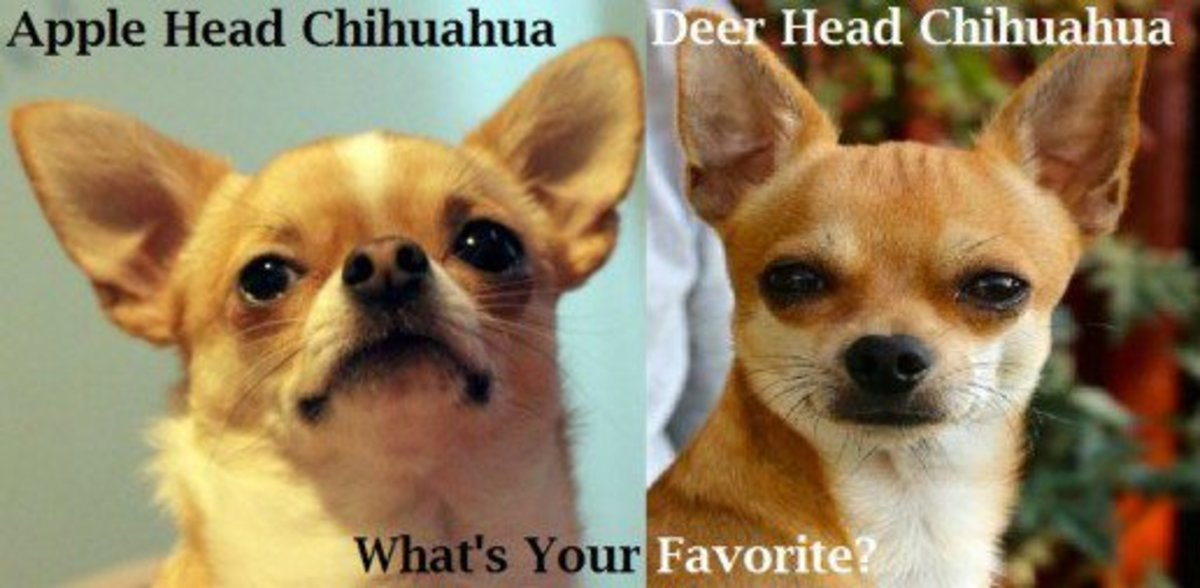 Which breed variety do you prefer?