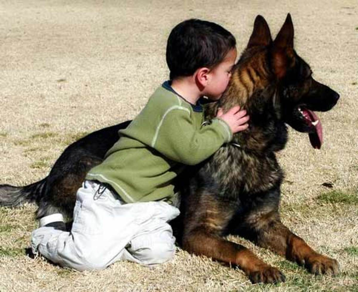 """German Shepherds are often banned in countries that identify them as """"aggressive."""""""