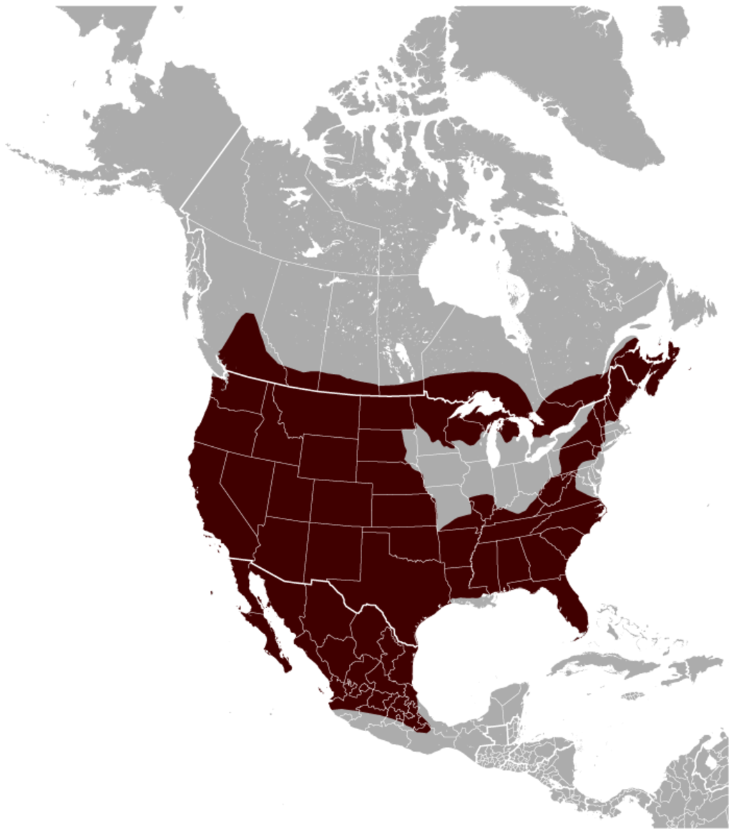 Common range of the bobcat.