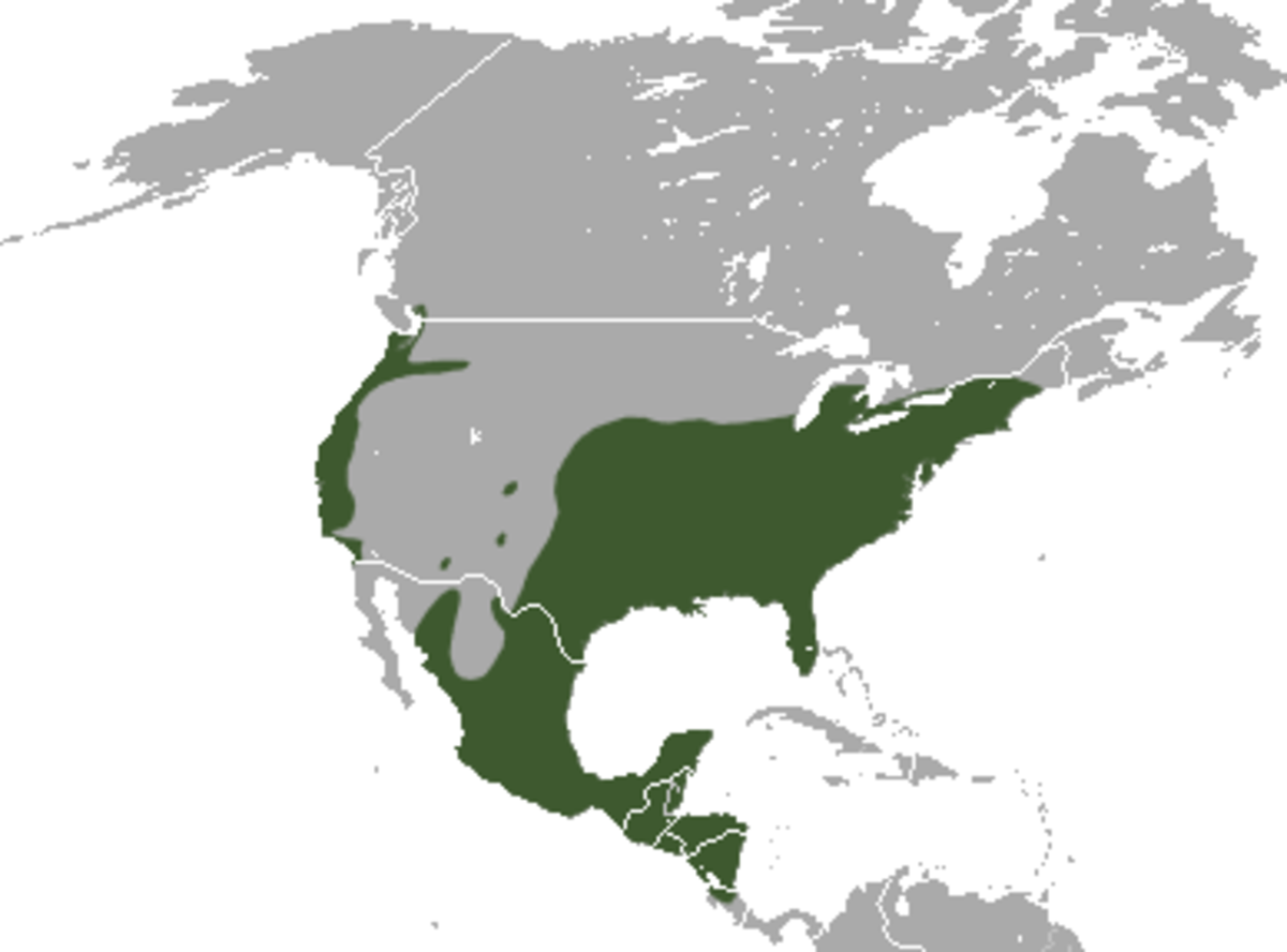 General range of the Virginia Opossum
