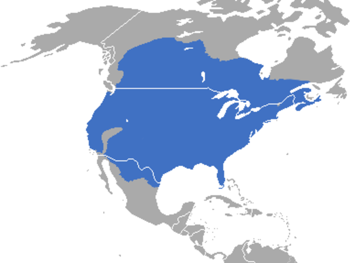 Range of the striped skunk