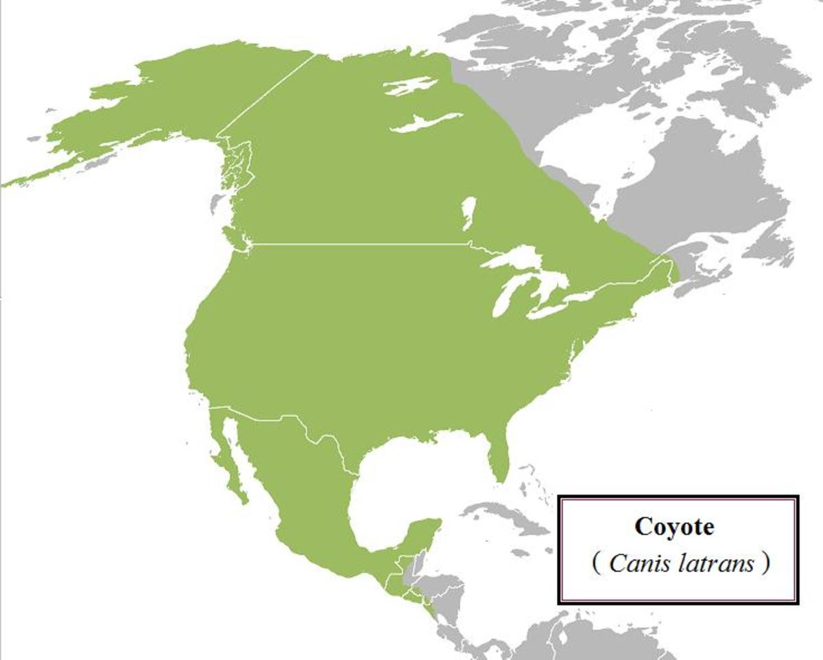 Range of the coyote