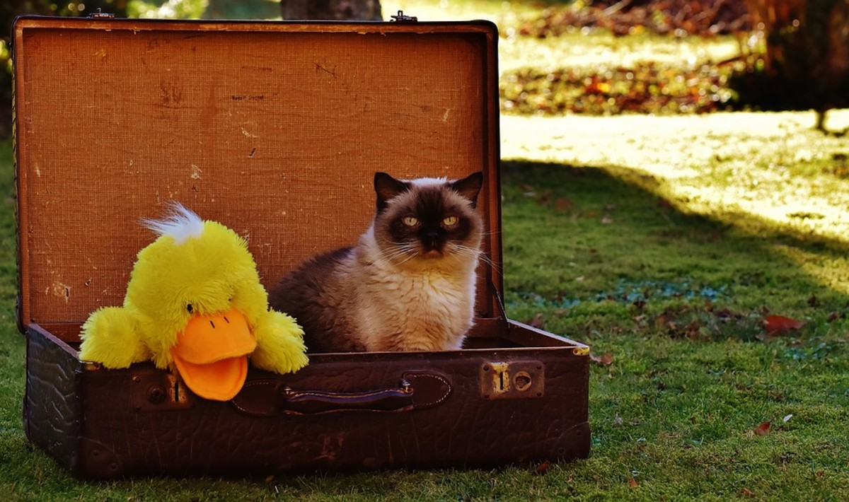 If you go away on vacation, don't expect to take your feline with you.