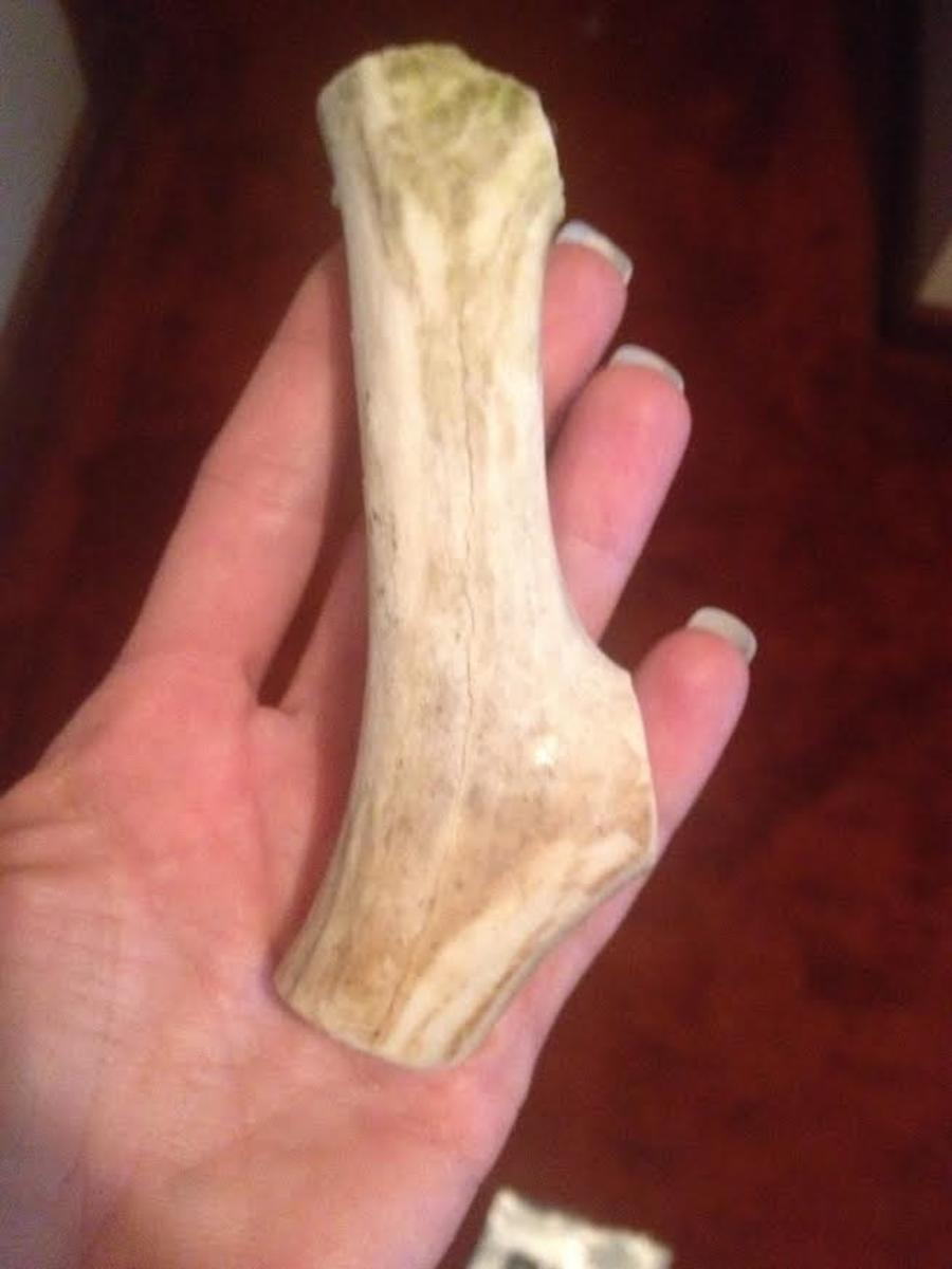 One of the deer antlers out of the package.