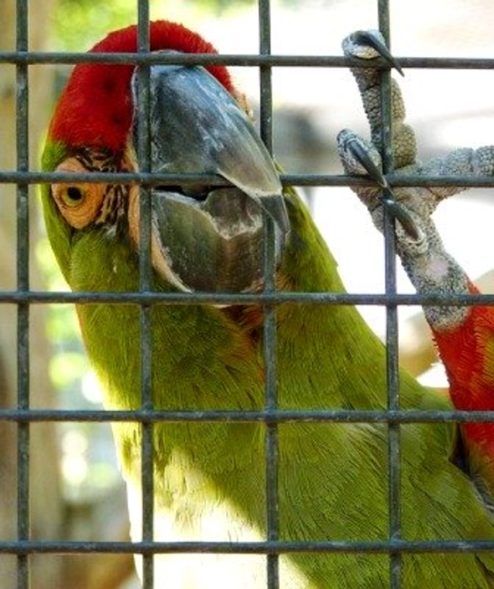 A parrot latches onto its cage to avoid having to go inside.