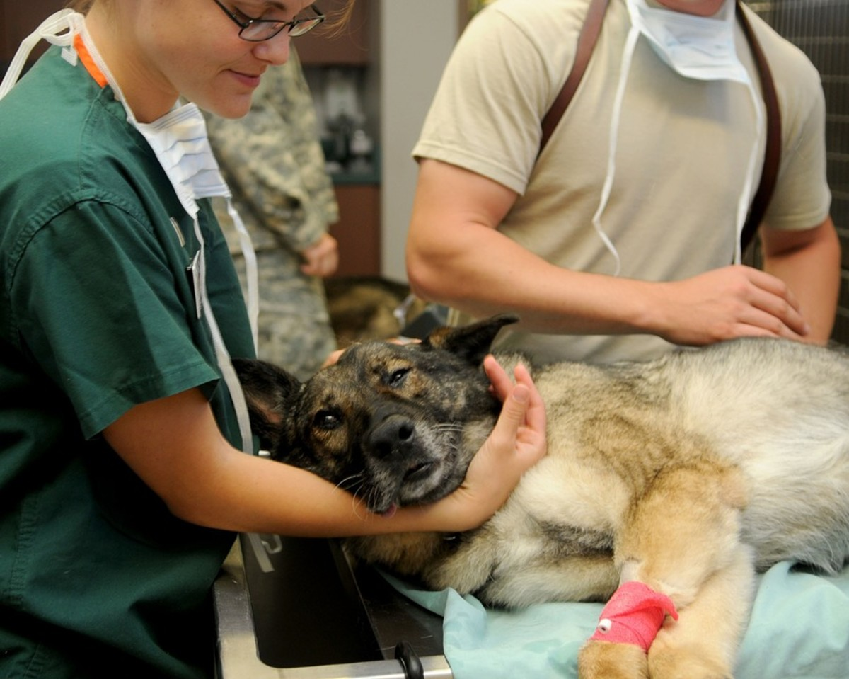 You need to consider the veterinary bills that owning a dog can incur. Basic medical attention such as shots are necessary early on, and costs can quickly rise if the dog suffers an accident or a serious illness.