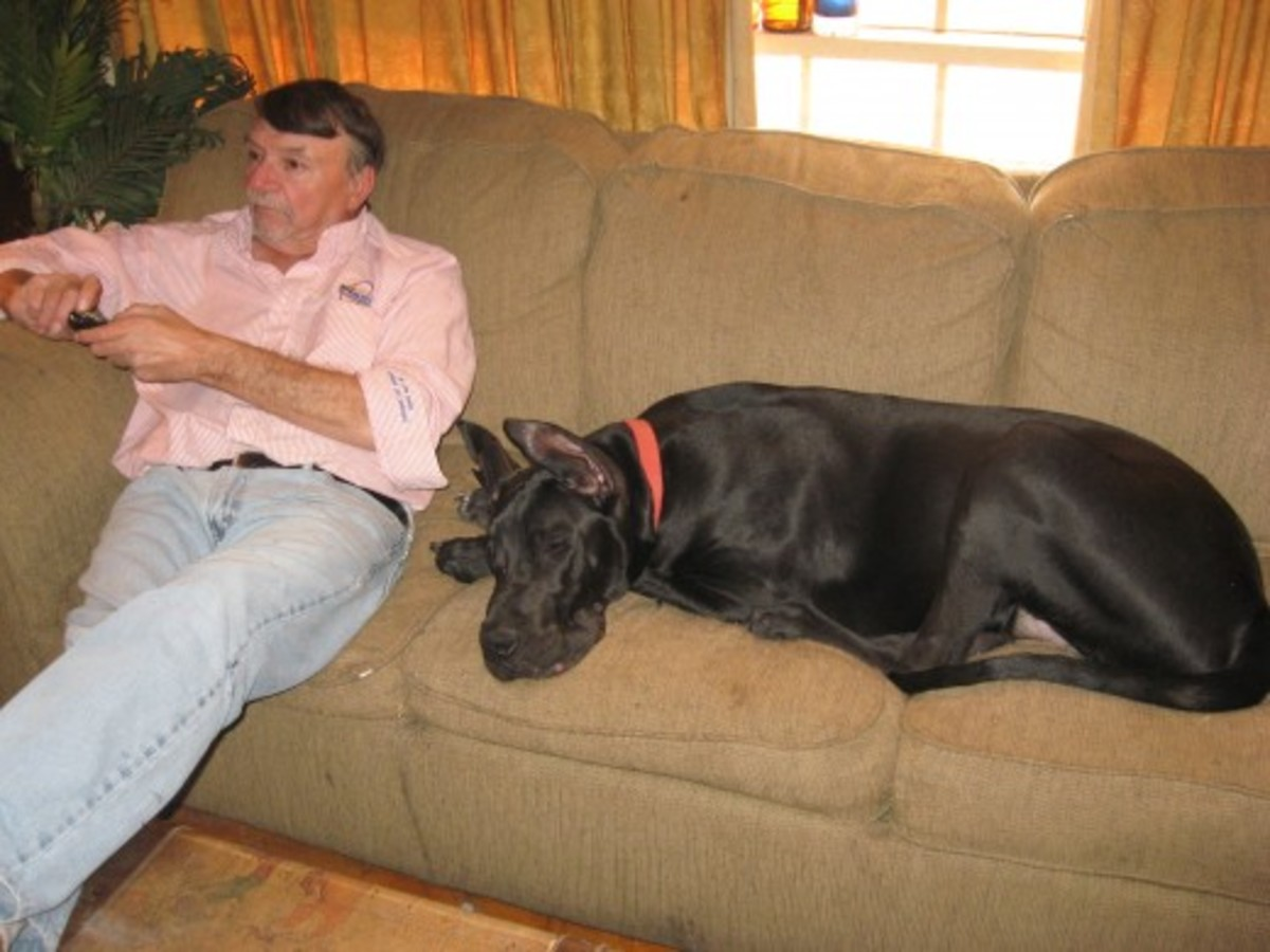 Does your dog always want to be close to you?