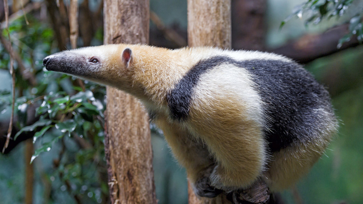 List of 40 Rare and Unique Exotic Pets - PetHelpful - By fellow animal  lovers and experts