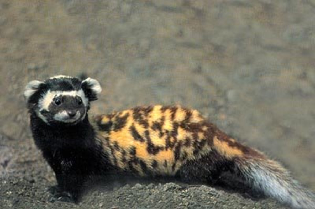 -cool-and-unique-exotic-wild-pets-youve-never-heard-of