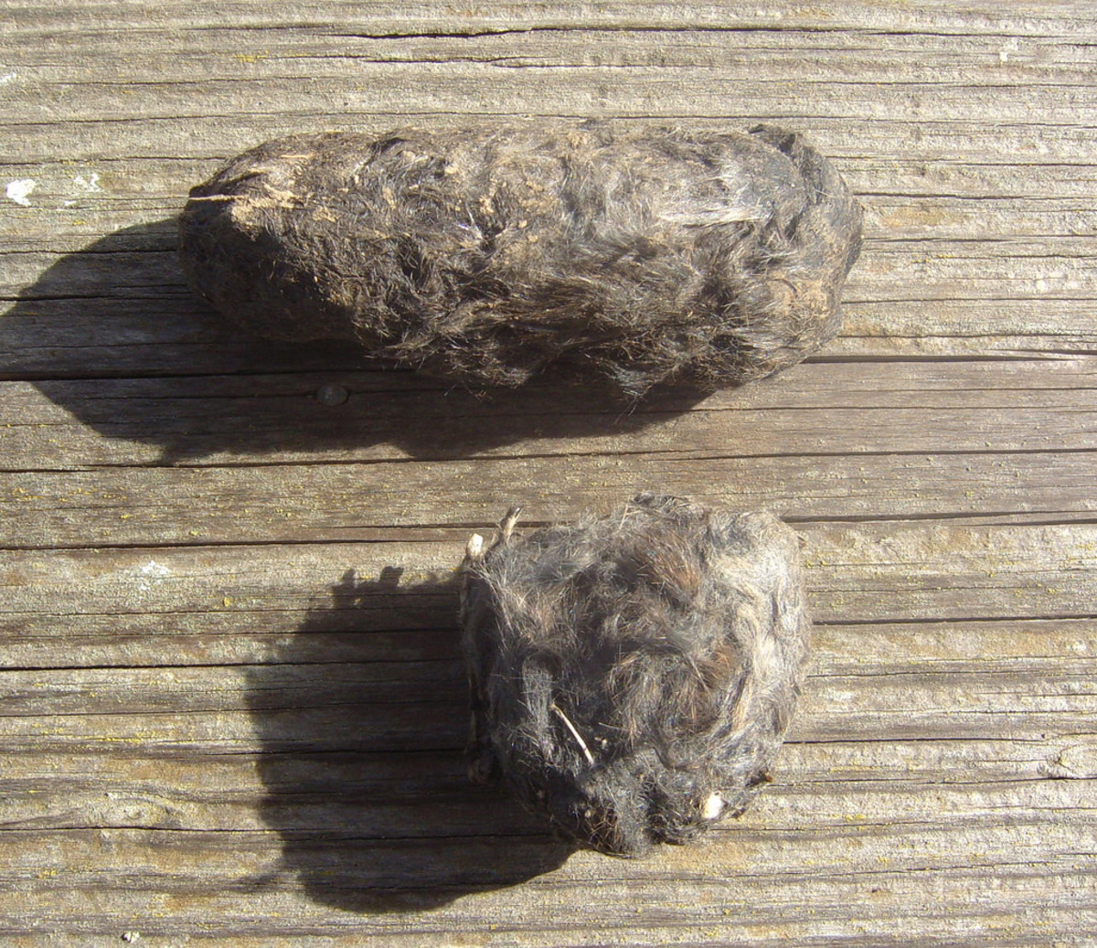 Here's an example of what owl pellets look like.