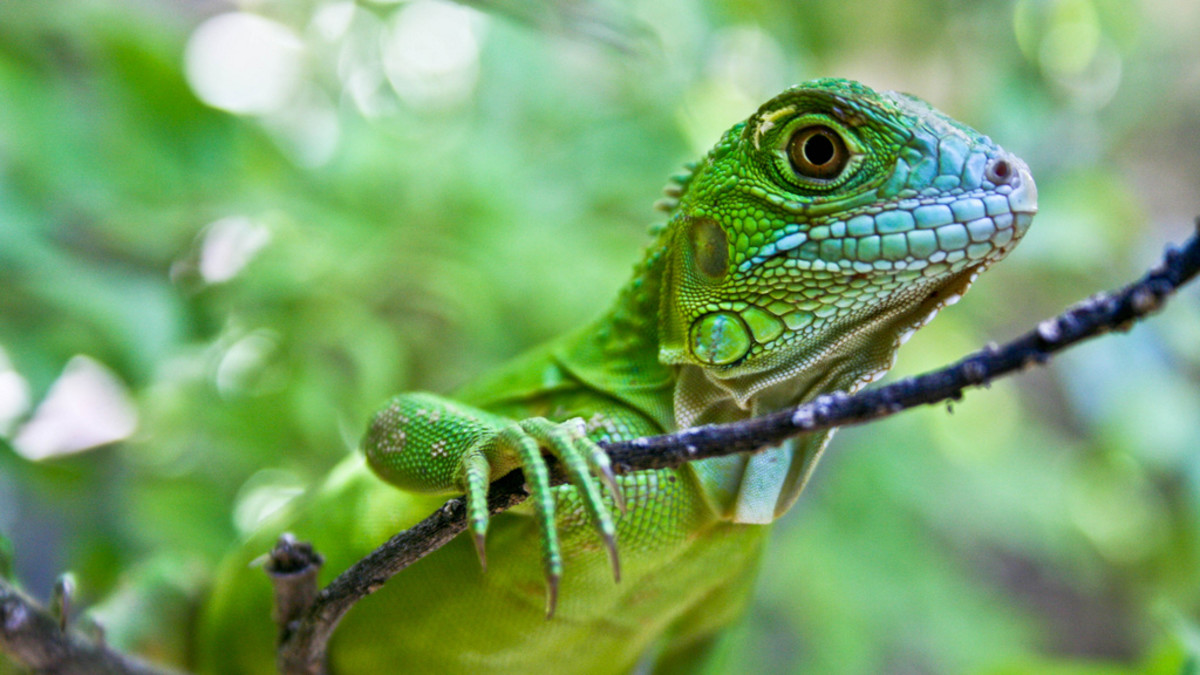 10 Exotic Pets That Are Inexpensive or Cheap