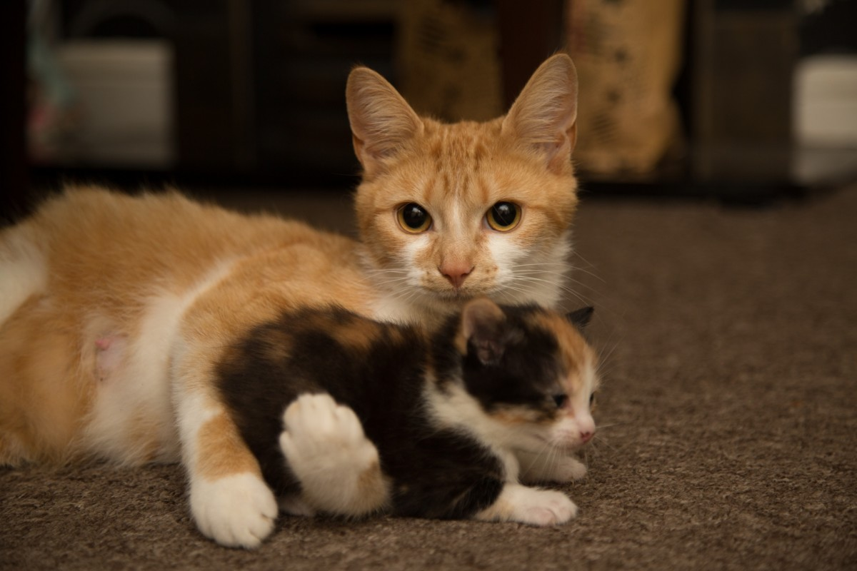 Before mixing your pets and the new kitten, ensure mutual safety first.