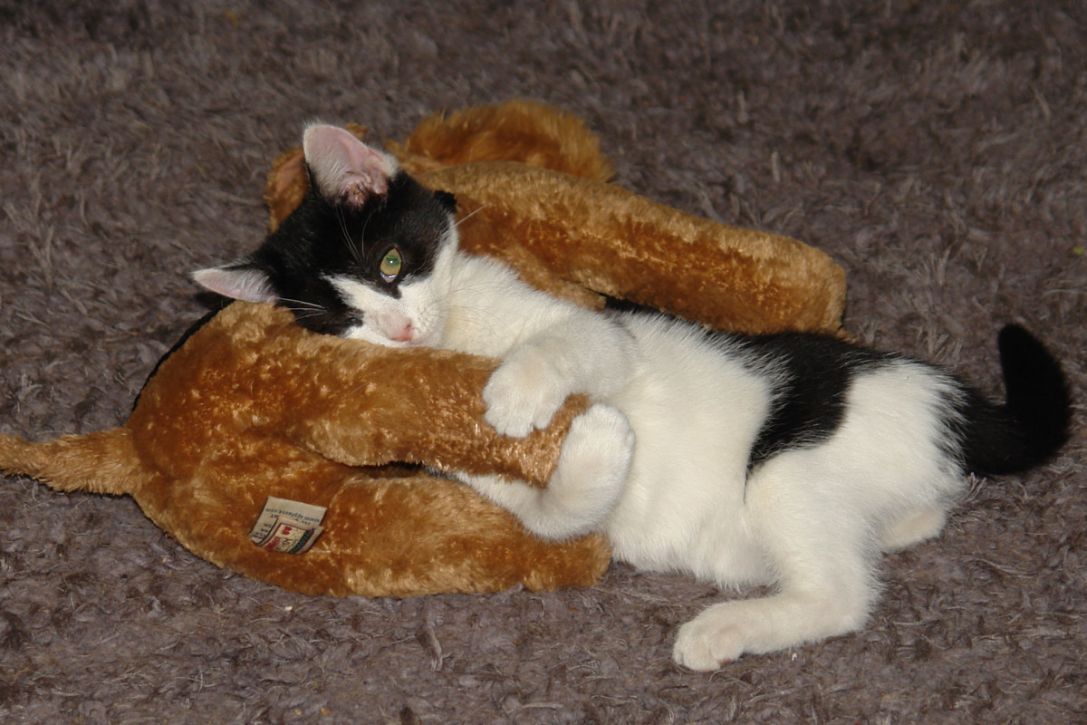 A happy kitten will make a toy out of anything.