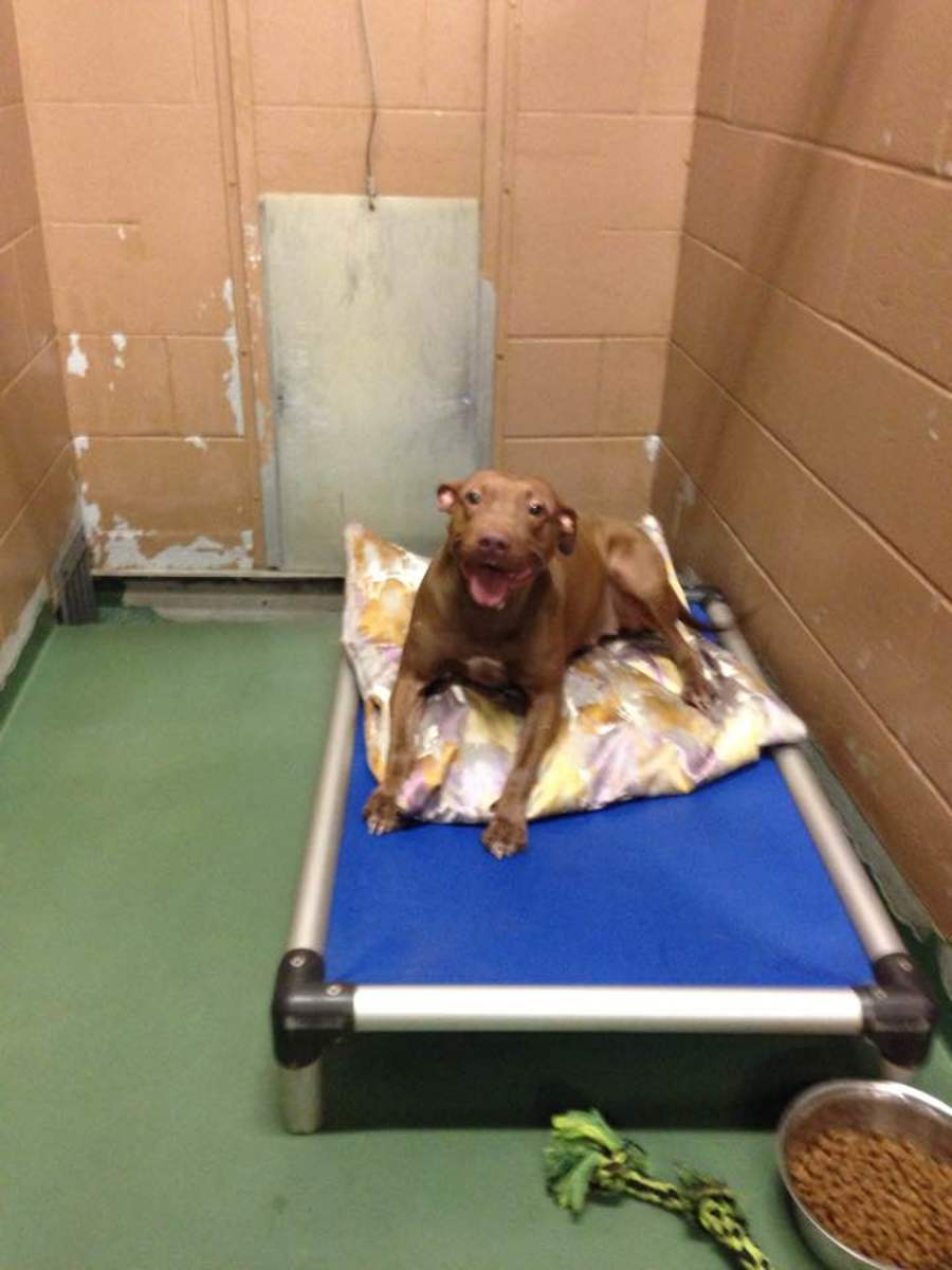 Look at the smile when receiving a bed!