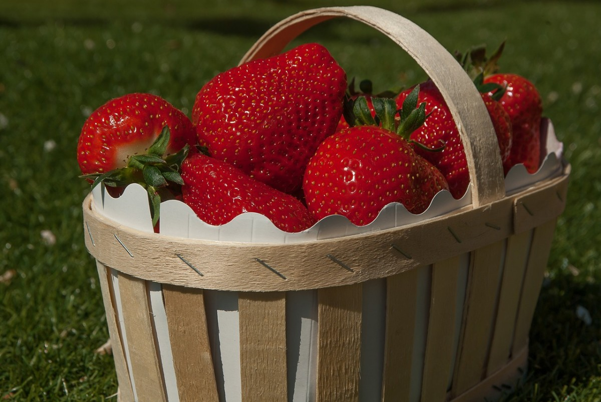 Strawberries are rich in C and other vitamins, and can be served to ducks either fresh or dried.