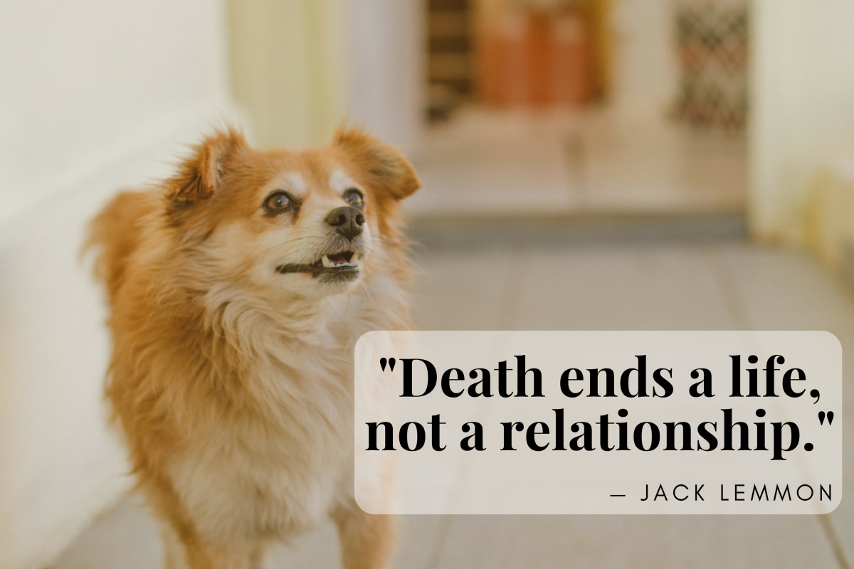 comforting words for loss of pet words of comfort for loss of dog