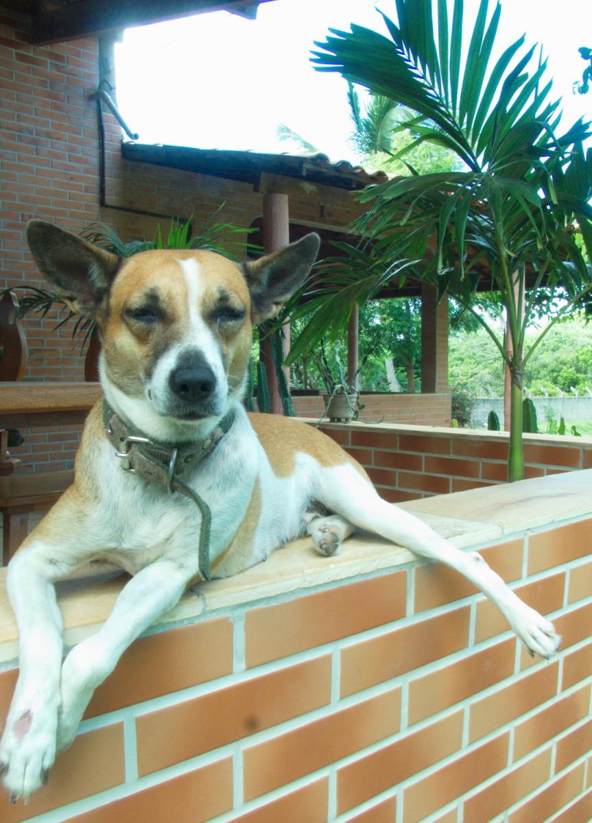 Our dog Daisy